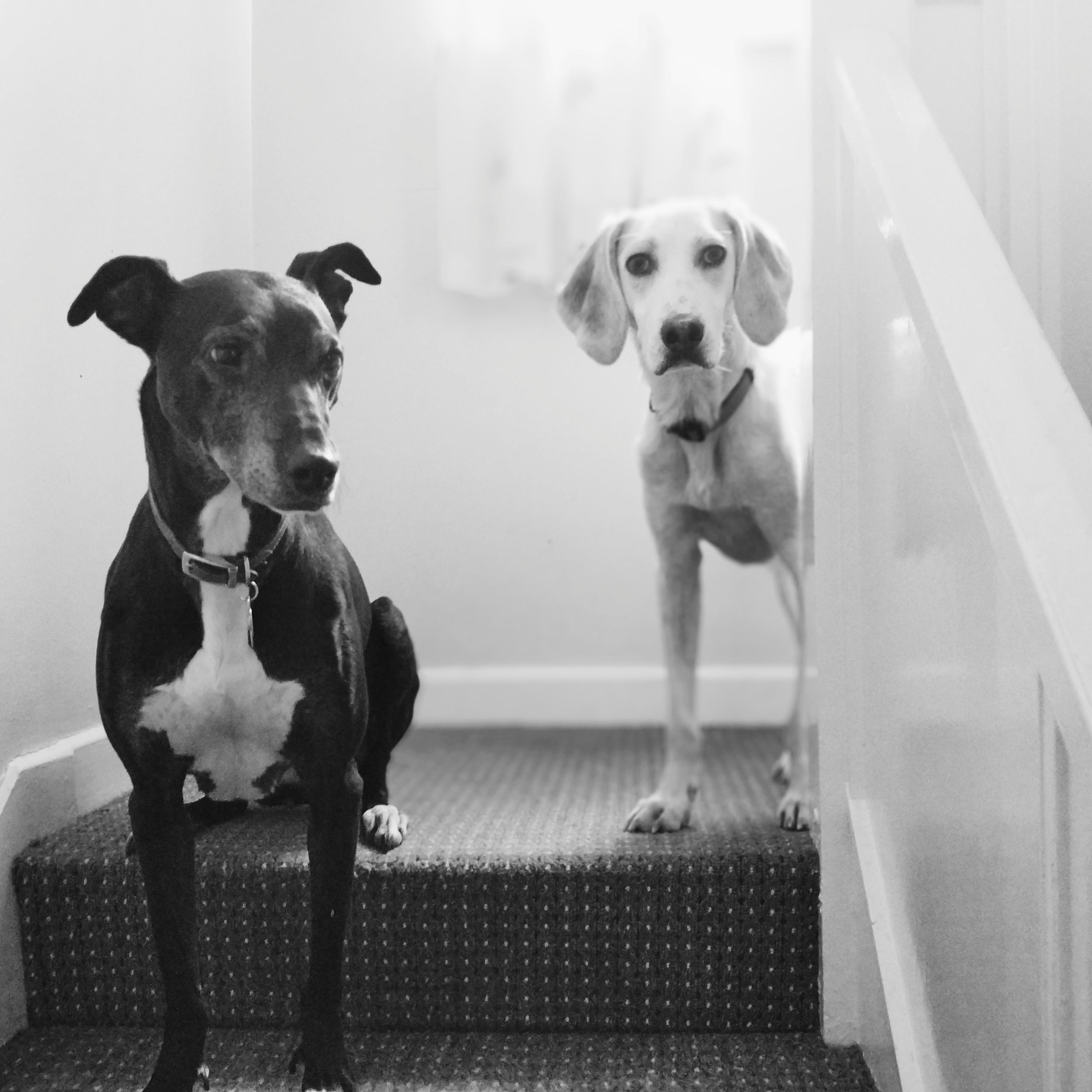 Zola + Odin
